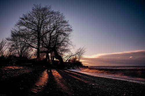 sun ontario canada tree beach water sand waves shadows sunny pebbles pebble fujifilm sunsetting qew xt10