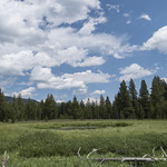 Pond along Cascade Creek Trail