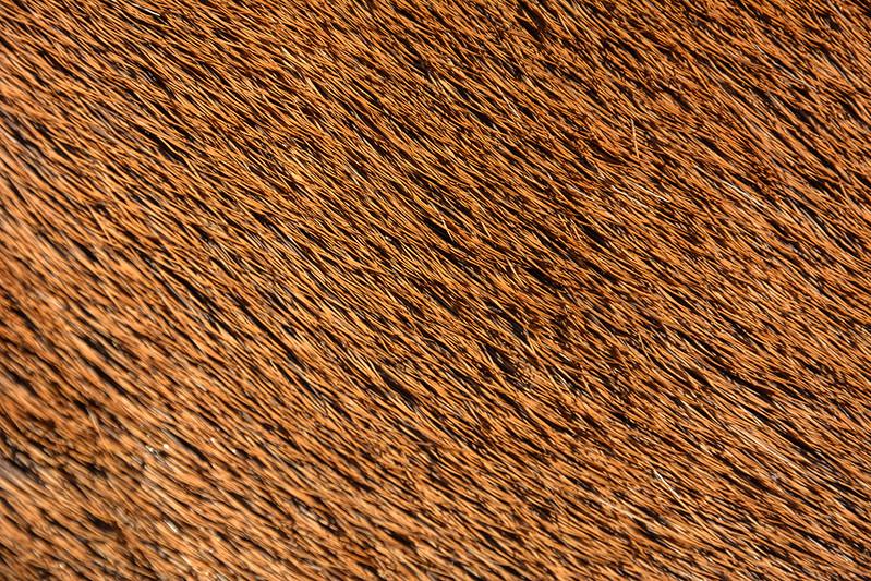 animal-fur-closeup-texturepalace-4