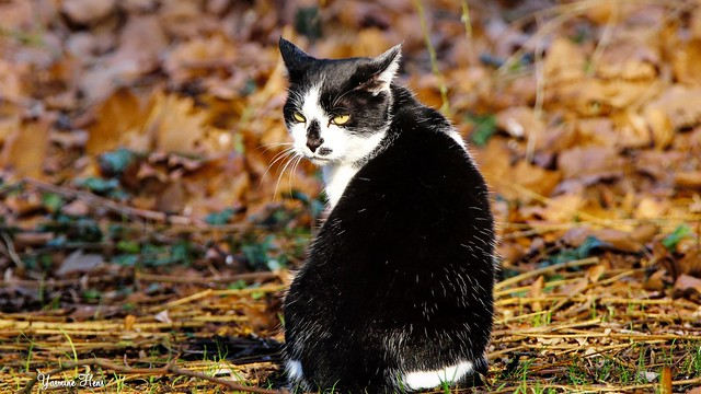 a cat  IMG_1753
