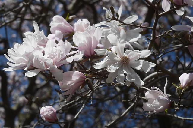 土, 2016-03-26 13:26 - Brooklyn Botanic Garden