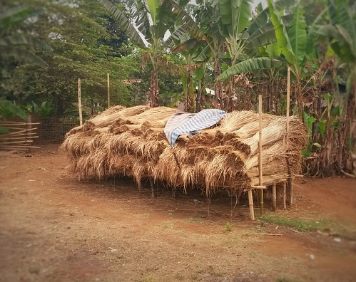Palm leaves for sale