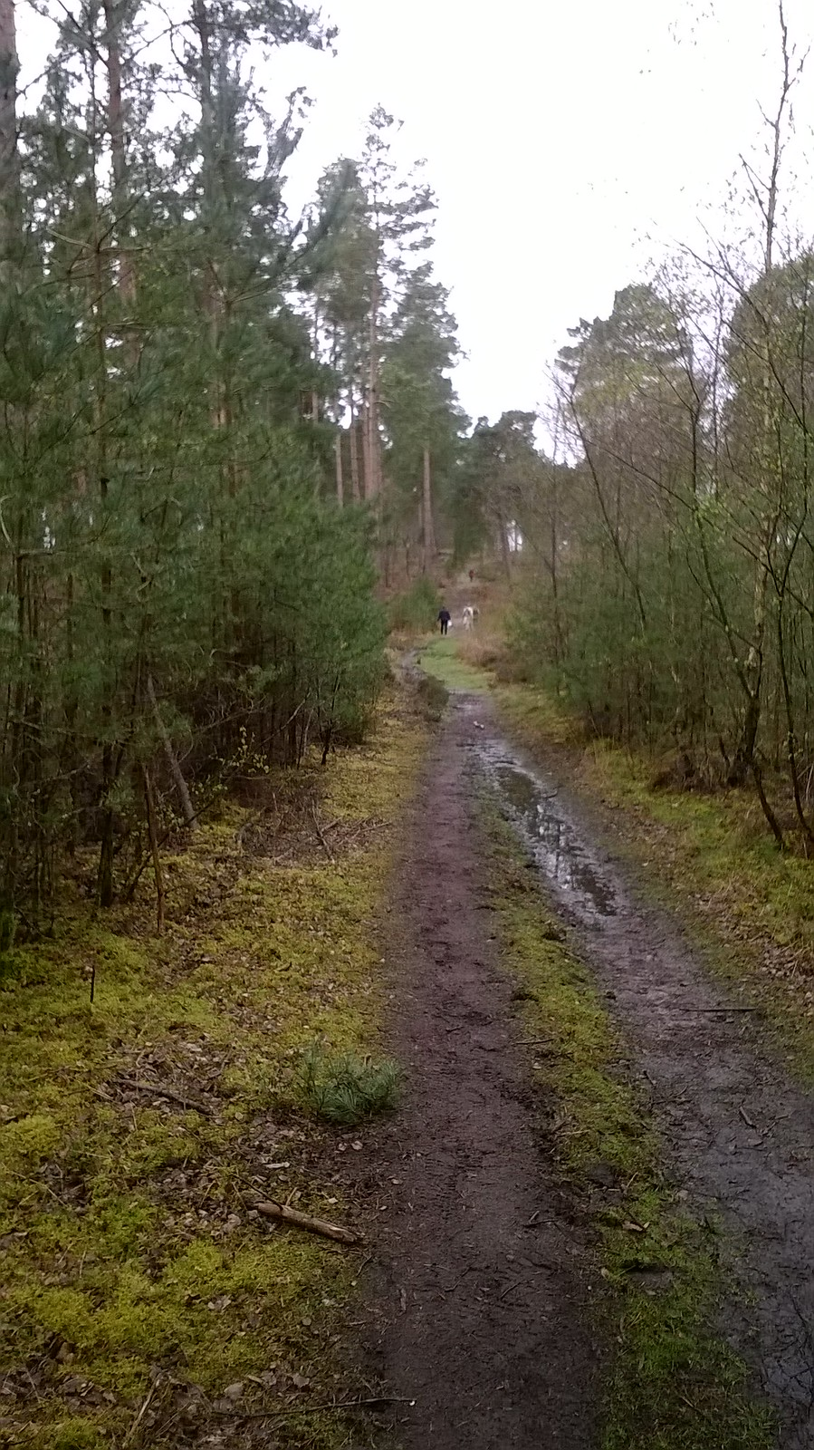 Through Thursley Common