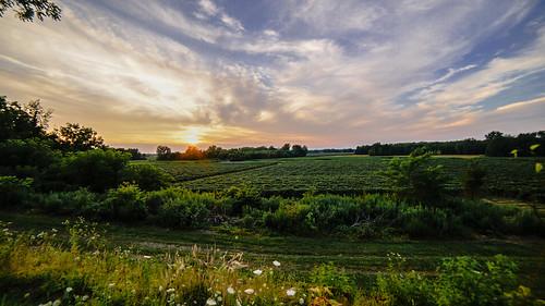 sunset summer sun ny green clouds buffalo vines sony bluesky f28 14mm rokinon