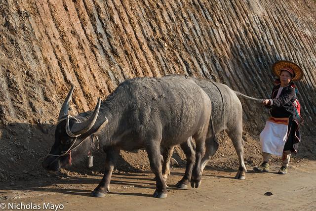 Black Dao Woman With Water Buffalo