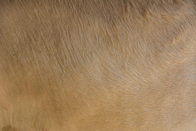 animal-fur-closeup-texturepalace-17