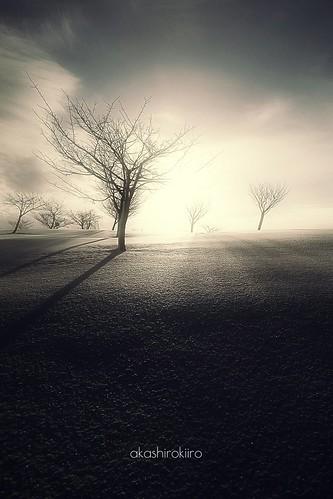 winter snow tree japan aomori hachinohe 木 雪 冬 morningsun 雪景色 青森 八戸 xperia