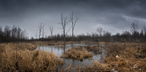 light panorama plants snow ontario canada nature water grass clouds rural forest reflections reeds dark outdoors nikon moody gloomy ottawa swamp tres d7100 bensenior nikond7100