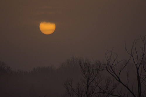 sky sun tree yellow fog sunrise soleil pentax arbres brouillard aube