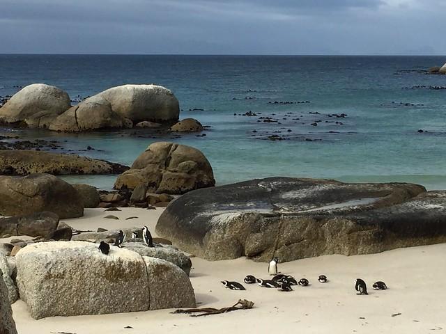 Boulders Bay penguins :)