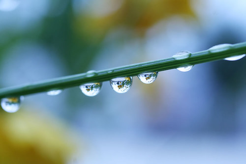 Water drops | by fox_kiyo