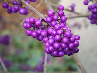 Berries | by Ghost V