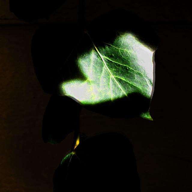 tryout_04 Light on Leaf
