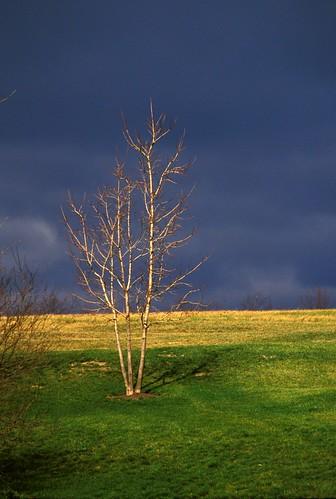 tree pennsylvania hollidaysburg blaircounty kodakelitechrome100extracolor