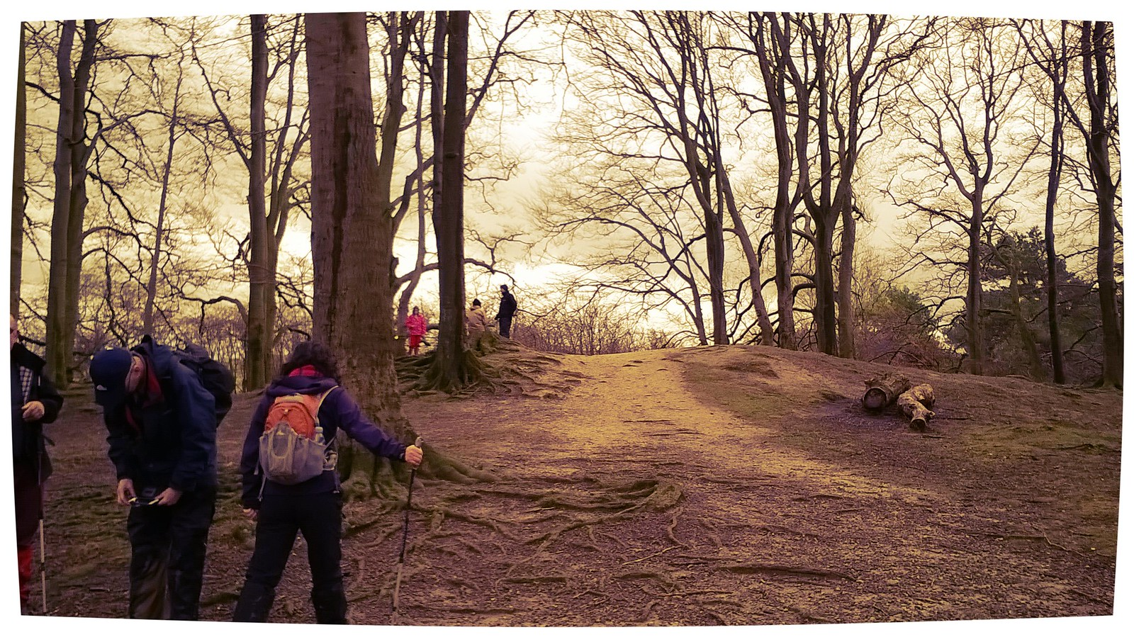 Preparing for the final climb to the summit? Sharpenhoe hill fort