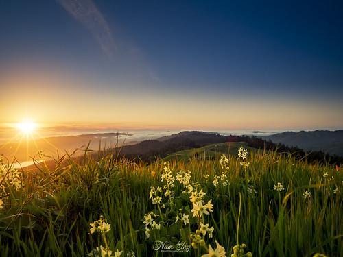 sunset mttam mounttamalpais lowfog