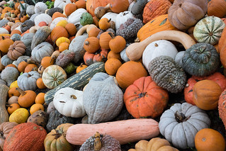 Pumpkin Village Dallas Arboretum | by VoxLive