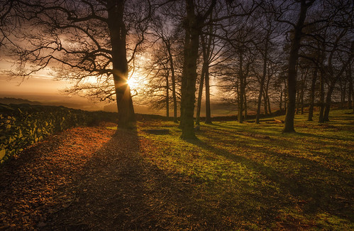 woodland shadows leicestershire sunburst parkland bradgatepark sigma1020mm nikond7000