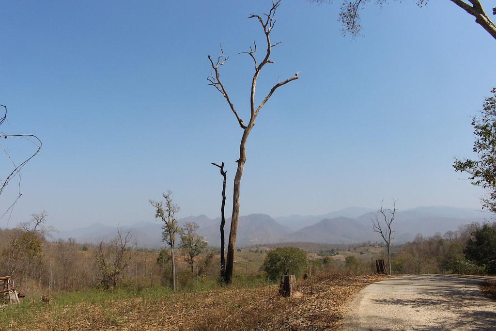 Hier en daar een dode boom
