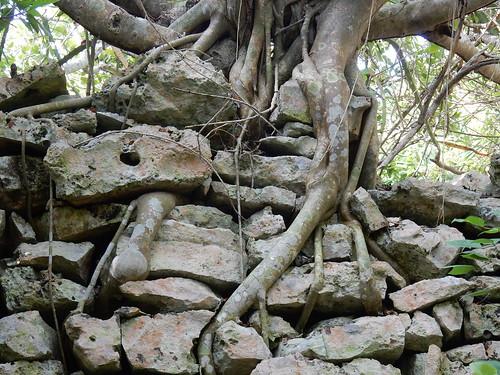 Tulum - boom op ruine