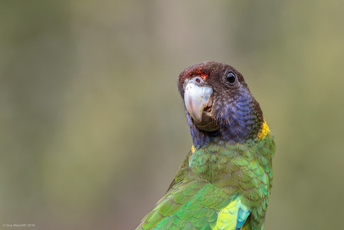 Twenty-eight Parrot | by gus.meredith