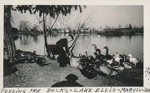 Little boy feeding ducks at a pond