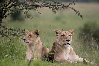 2016_01_08_KenyaLive_Day_#02_PM_JPEG_RESIZED_0006 | by makeitkenya