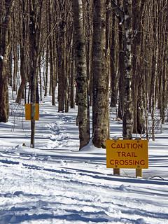 Maple Run Trail