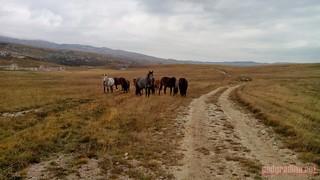 IMG_20131115_123736 (Kopiraj) | by Selo Podgradina (Livno)