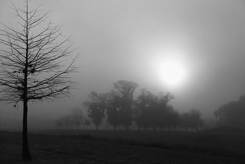 trees blackandwhite mist monochrome fog bayou labrume janbuchholtz