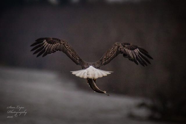 The Eagle Has Landed IX