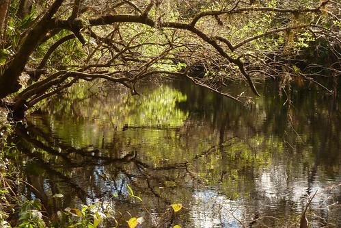 Hillsborough River State Park en Floride | by Diadidi
