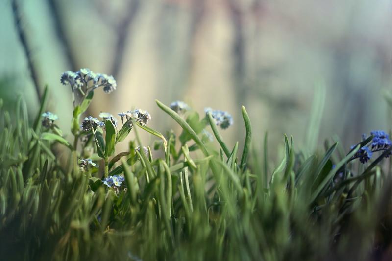 blur-dreamy-texture-texturepalace-44