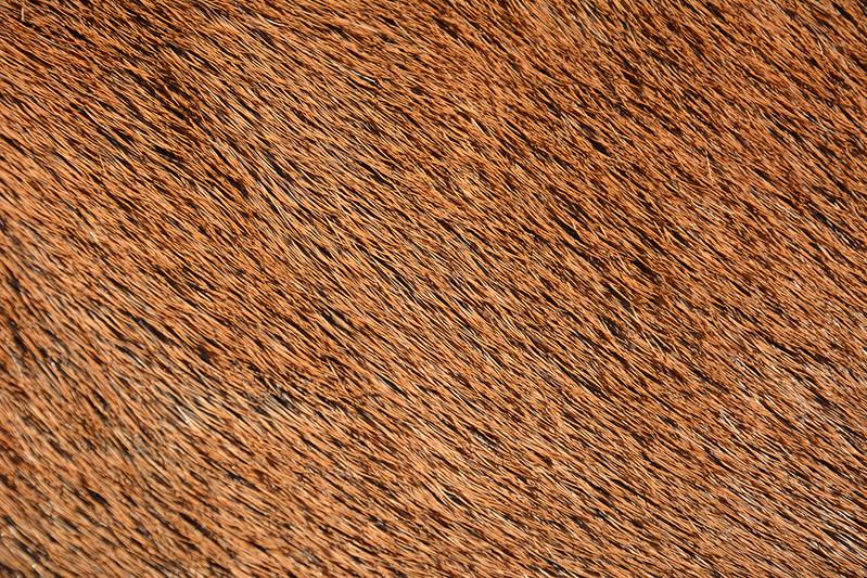 animal-fur-closeup-texturepalace-2