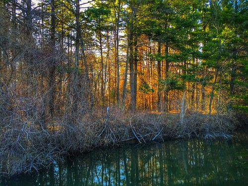 trees sunset sunlight apple nature forest evening spring woods colorful stream michigan scenic pines iphone iphoneography