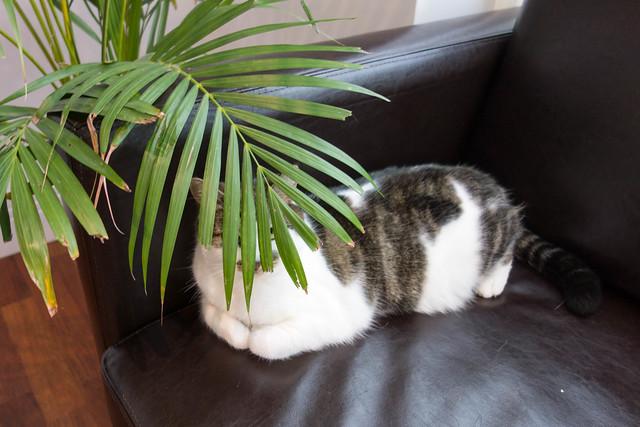 Bailey behind palm