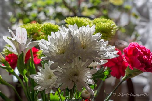 virginia chesterfieldcounty surreywood home flowersandplants flowers chrysanthemums cutflowers backlit warmsunlight january2016 january 2015 zeiss5014