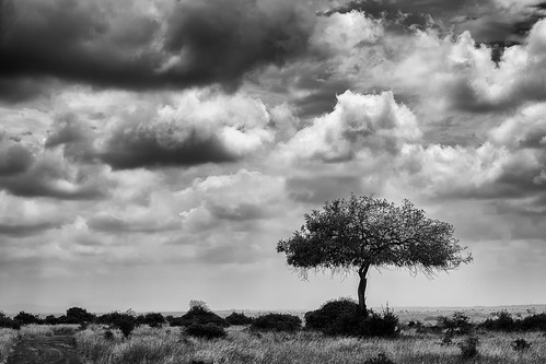park sky tree clouds landscape kenya nairobi safari national