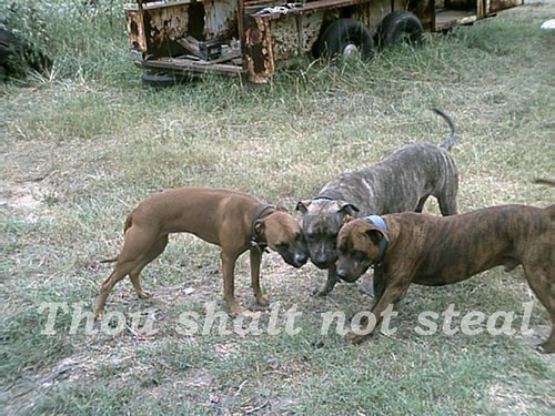 3 way tug of war | by dolittlethings09