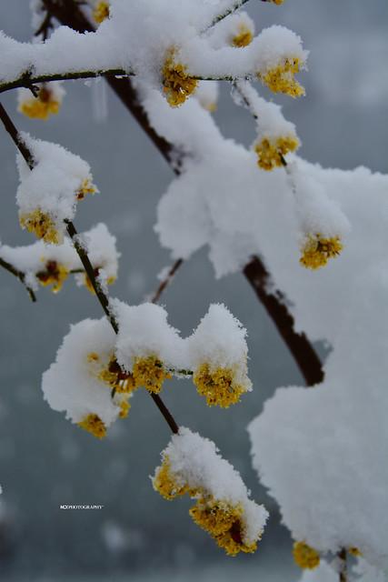 Lugano sotto la neve di marzo