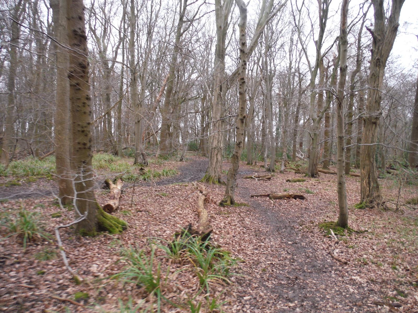 Paths in Wormley Wood SWC Walk 168 Broxbourne Circular