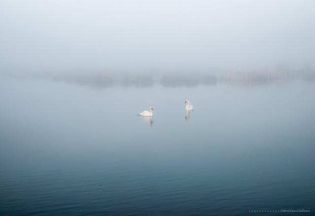 A wonderful misty sundaymorning...