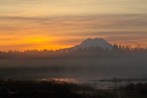 trees fog sunrise pastel mtrainier 1riverat matthewreichel