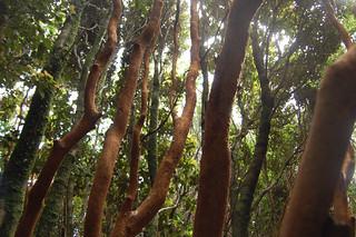 Parque Nacional Chiloé in Cucao, Chiloé, Chile | by blueskylimit