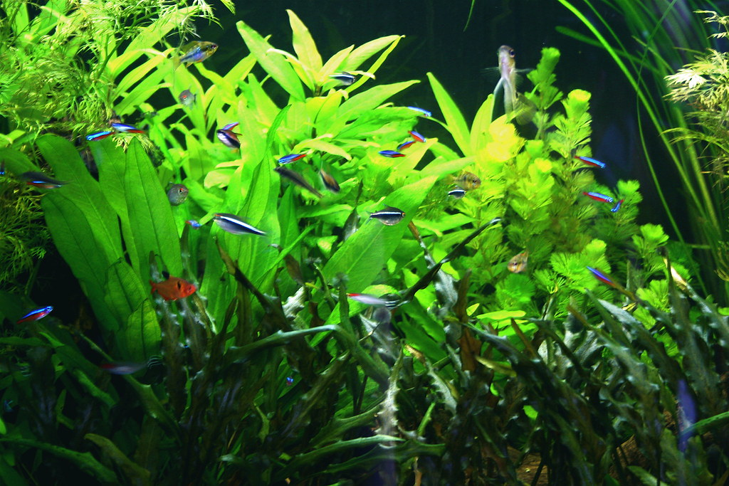 Image result for Live Aquarium Plants