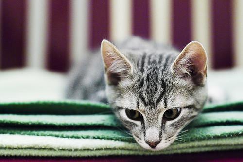 Abandoned cats - calendar | by Stefan Tell