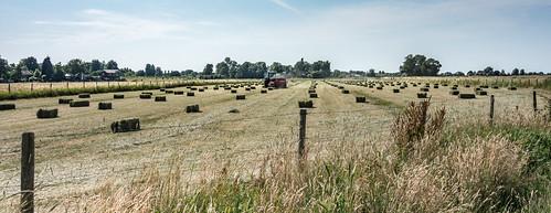 panorama tractor field rural fence haybale vlaardingen haybales hff southholland balinghay haybaling nederlandvandaag fencefriday graasland