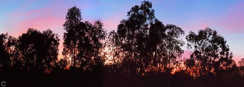 raveclix india incredibleindia canon canon5dmarkiii ef100mmf28lisusmmacro sunset colors silhouette landscape panorama ravindra ravi kaushik