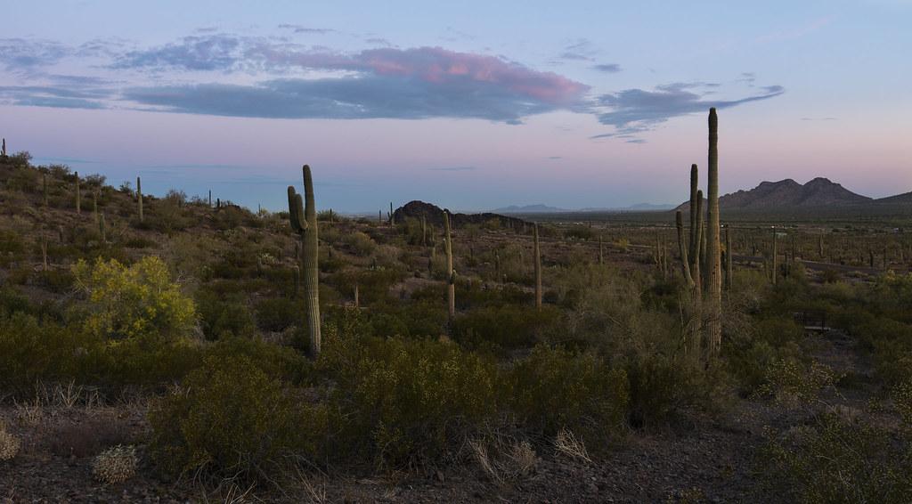 Saguaro Morning Prayer