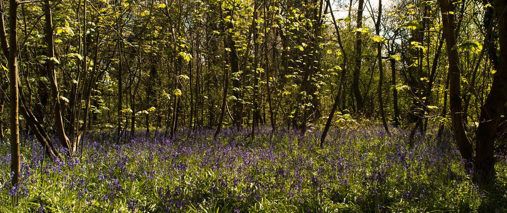 Lassington Wood April 2016